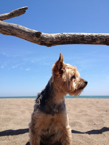 Winston at the beach - Point Pelee
